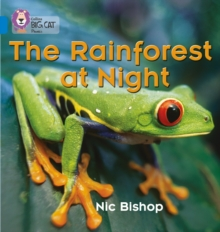 The Rainforest at Night, Paperback Book