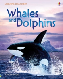 Whales and Dolphins, Hardback Book