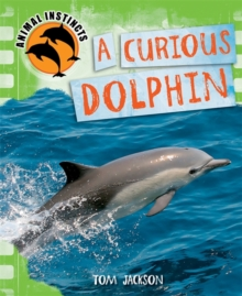 Curious Dolphin, Paperback Book