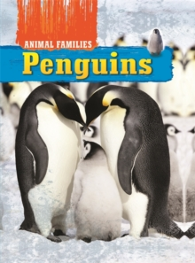 Penguins, Hardback Book