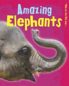 Amazing Elephants, Paperback Book