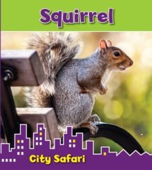 Squirrel : City Safari, Hardback Book