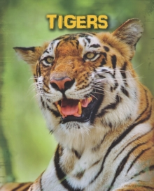 Tigers, Paperback Book
