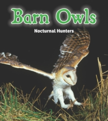 Barn Owls : Nocturnal Hunters, Paperback Book