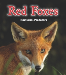 Red Foxes : Nocturnal Predators, Paperback Book