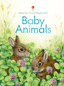 Young Beginners Baby Animals, Hardback Book