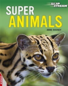 Super Animals, Paperback Book