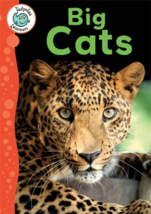 Big Cats, Paperback Book