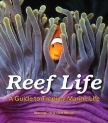 Reef Life : A Guide to Tropical Marine Life, Paperback Book