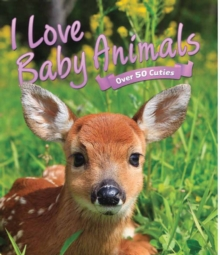 I Love: Baby Animals, Hardback Book