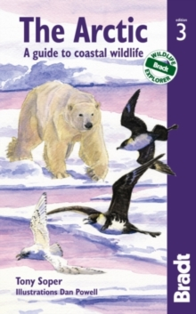 Arctic : A Guide to Coastal Wildlife, Paperback Book