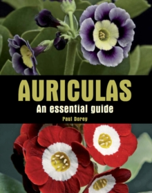 Auriculas : An Essential Guide, Hardback Book