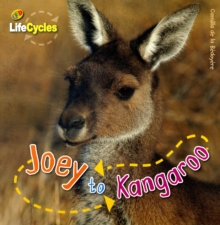 Lifecycles: Joey to Kangaroo, Paperback Book
