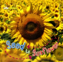 Lifecycles: Seed to Sunflower, Paperback Book