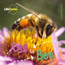 Life Cycles: Egg to Bee, Paperback Book
