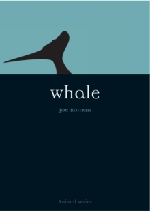 Whale, Paperback Book